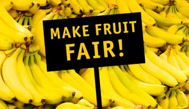 make_fruit_fair_1280x600